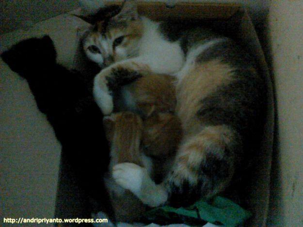 Keluarga Kecil si Bayi Kucing