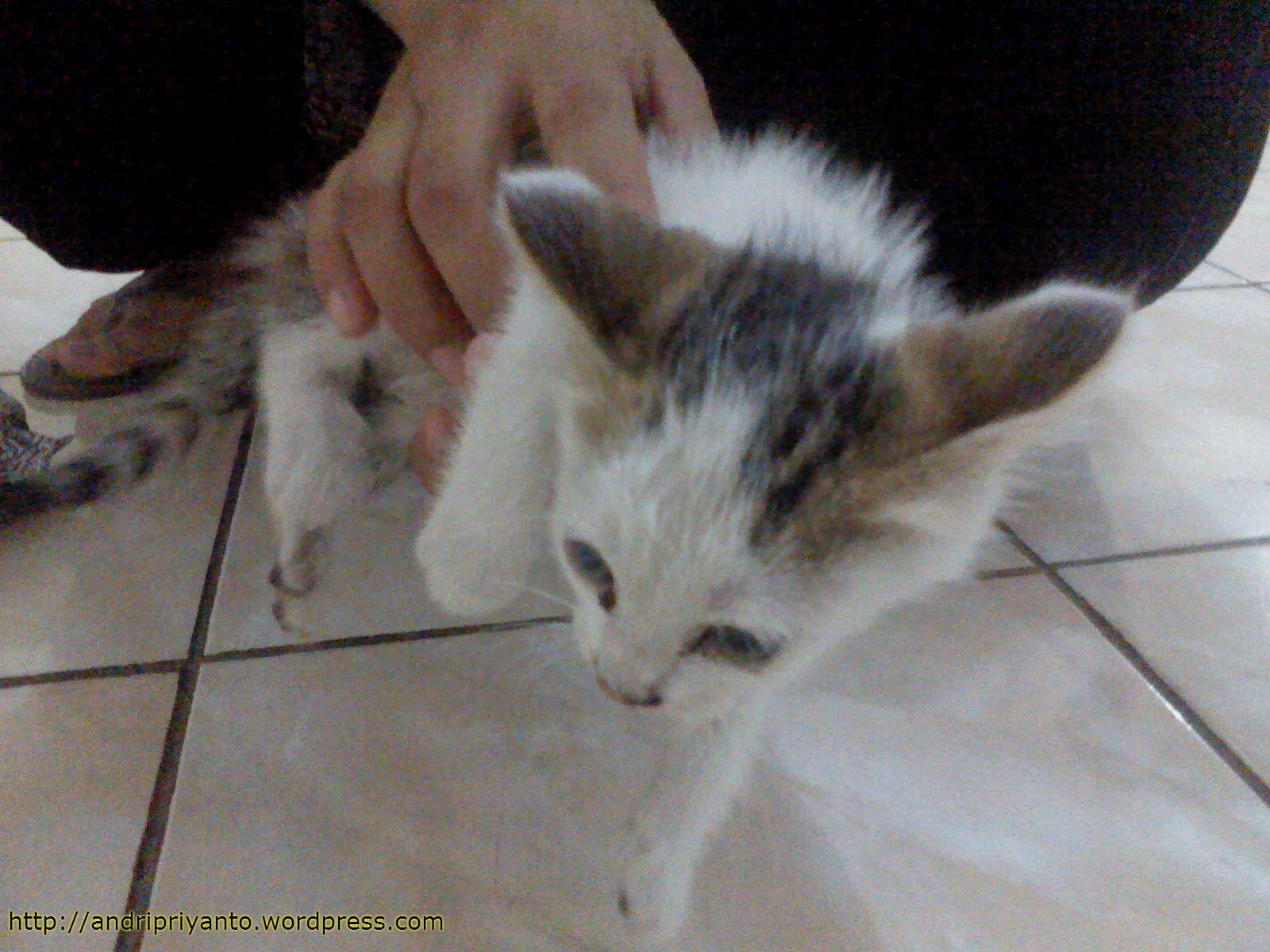 Suara Kucing Blognya Andri Priyanto