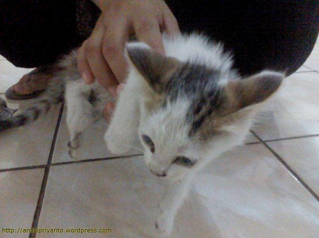 Anak Kucing yang Ditemukan
