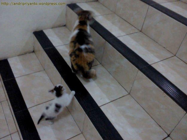Anak Kucing yang Mengikuti Jalanya Sang Induk